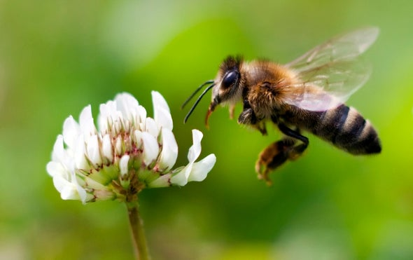 Honeybees Can Put Two and Two Together
