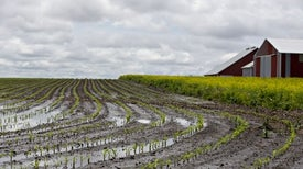 Farmers Must Adapt as U.S. Corn Belt Shifts Northward