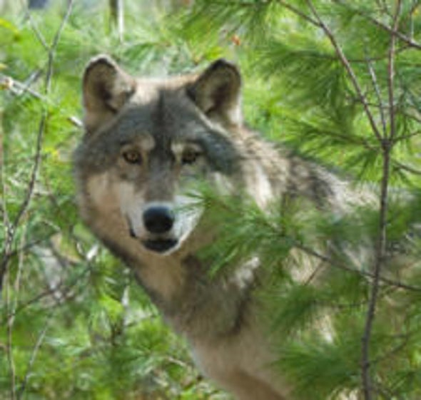 Broader Interpretation Sought for Endangered Species Act