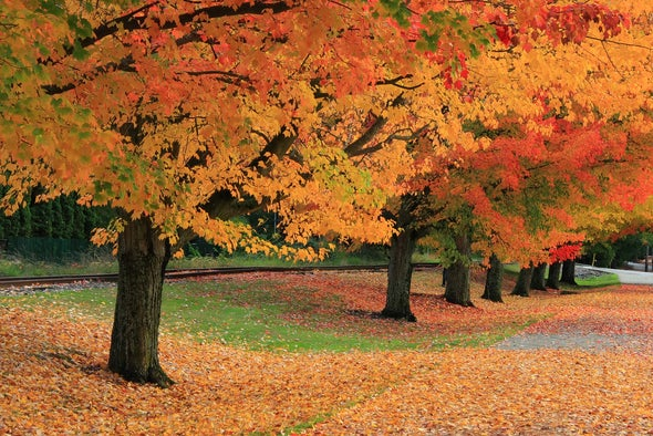 Drought and Climate Change Could Throw Fall Colors Off Schedule
