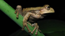 Amphibian-Killing Invasive Fungus Causes Record Wildlife Loss