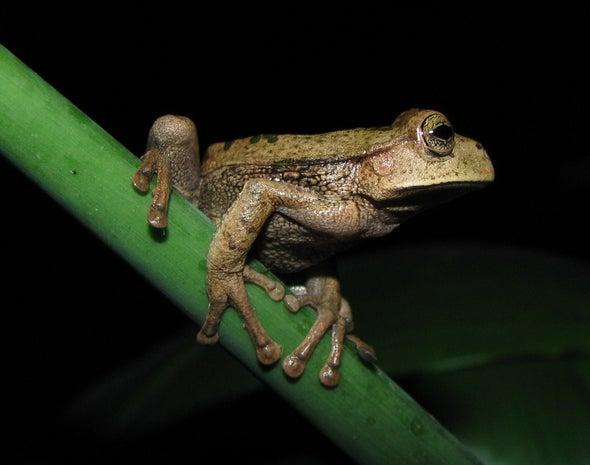Amphibian-Killing Invasive Fungus Causes Record Wildlife Loss