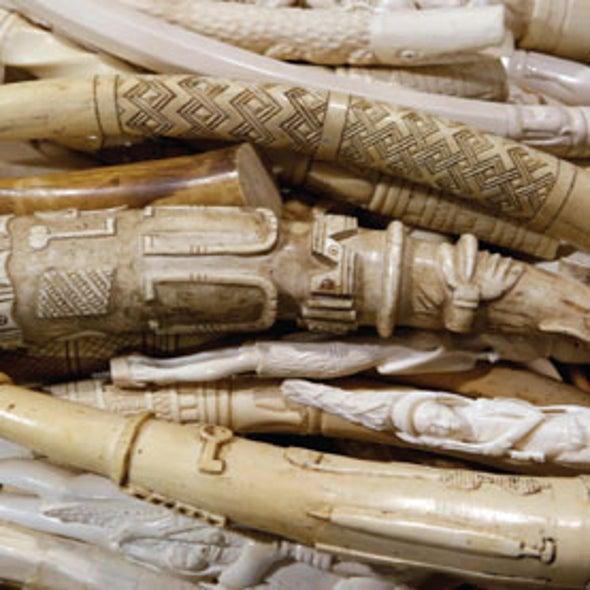 Feds Crush 6 Tons of Ivory to Save Elephants