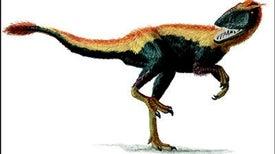 Feathered <i>T. rex</i> kin