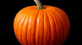 We Owe Our Pumpkins to Pooping Megafauna