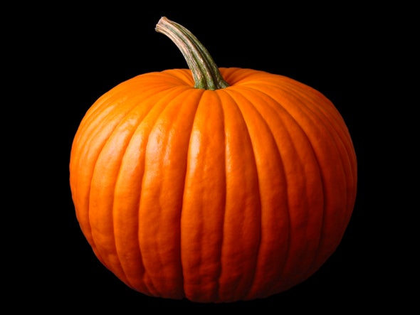 We Owe Our Pumpkins to Pooping Megafauna