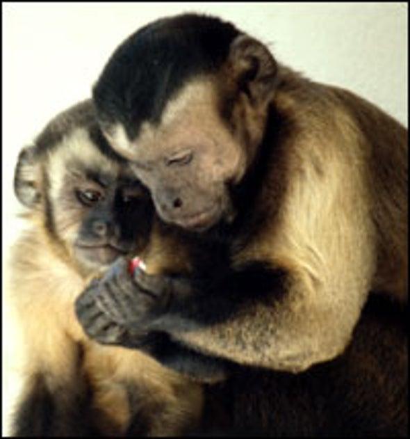 Monkey Business Is Fair Play