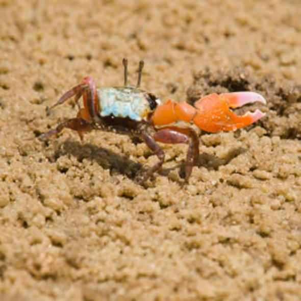 How Crabs Find Their Way Home