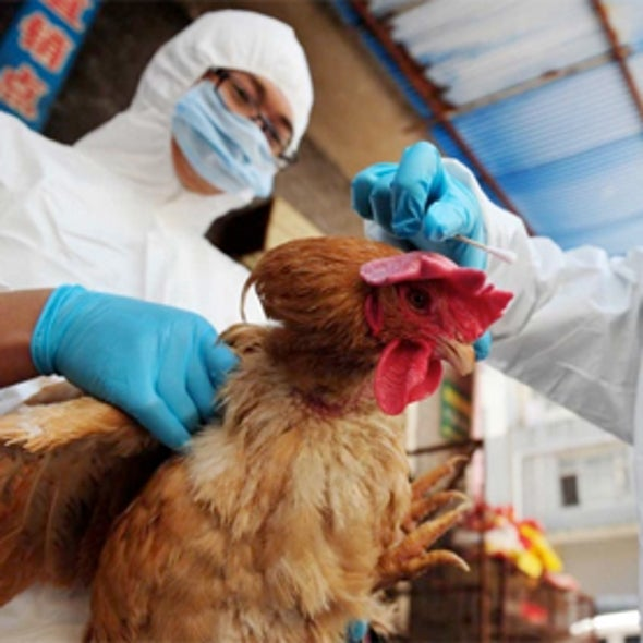 Source of Novel Avian Flu Outbreak Urgently Sought