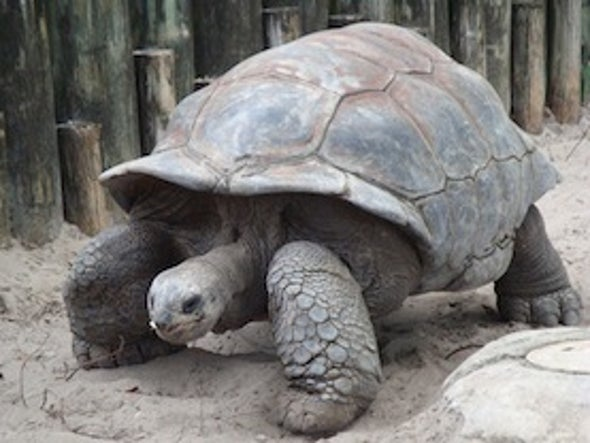 Imported Tortoises Could Replace Madagascar's Extinct Ones