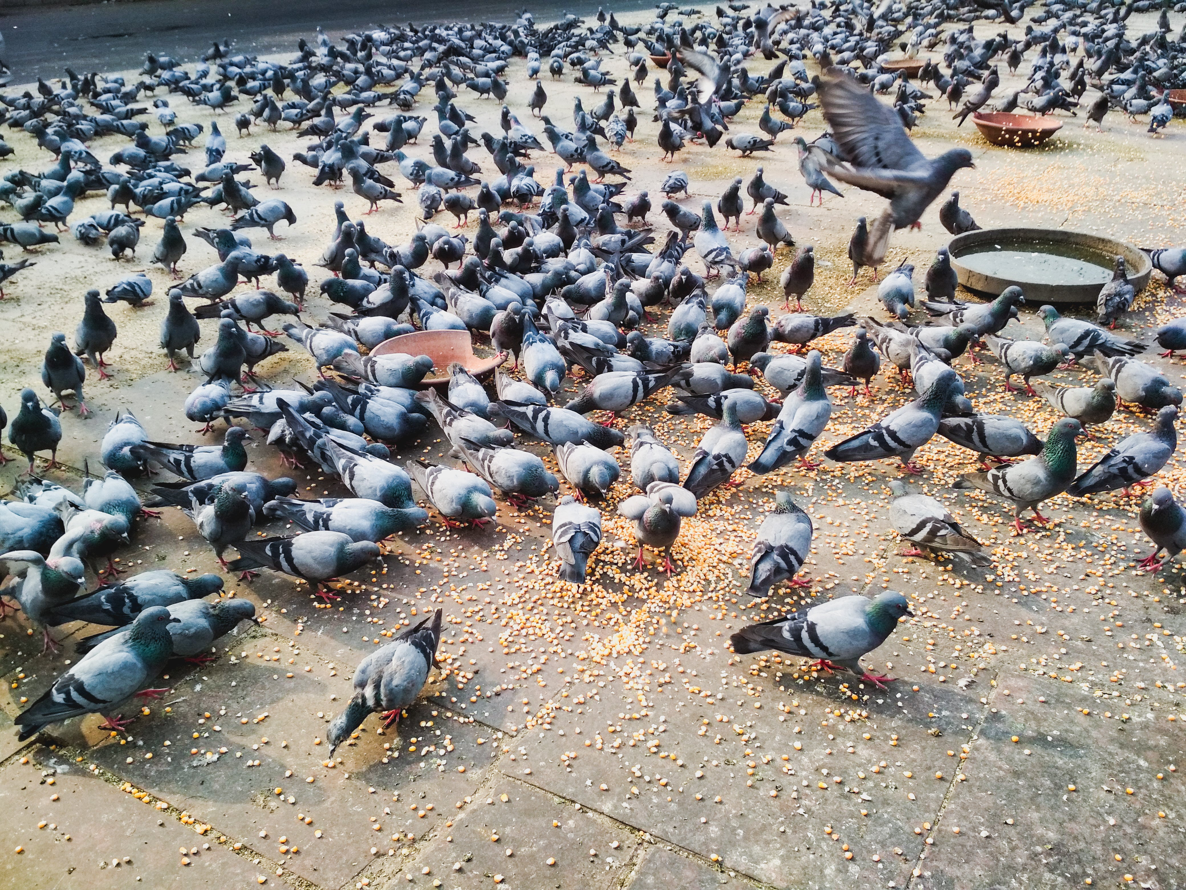 City Birds: Big-Brained with Few Offspring or Small-Brained with a Lot