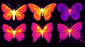 Cool Butterfly Effect: Insect Equipment Could Inspire Heat-Radiating Tech