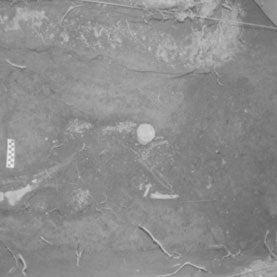 ghana-skeleton