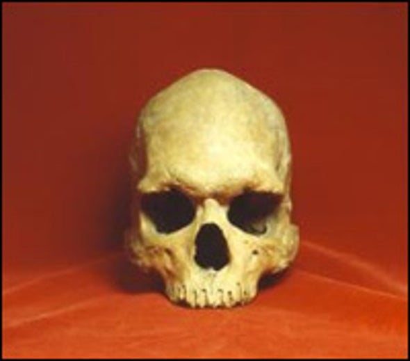"Skulls Add to ""Out of Africa"" Theory of Human Origins"
