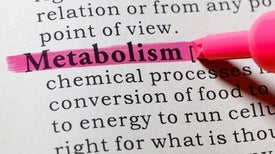 What Is Your Metabolism?