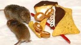 Researchers Identify Internal Fat 'Furnace' in Mice