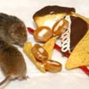 Researchers Identify Internal Fat 'Furnace' in Mice