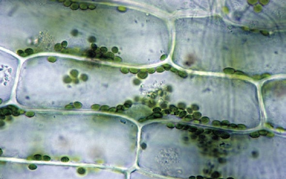 """New """"Bionic"""" Leaf Is Roughly 10 Times More Efficient Than Natural Photosynthesis"""