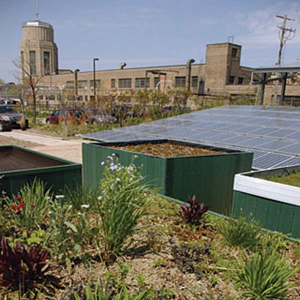 "Urban Roofscapes: Using ""Wasted"" Rooftop Real Estate to an Ecological Advantage"