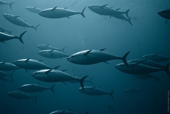 Humans Have Tripled Mercury Levels in the Ocean