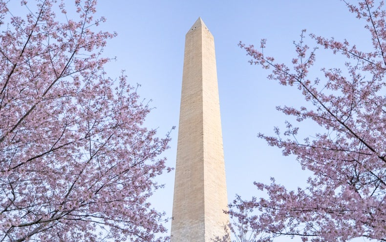 Iconic Cherry Blossoms Are Blooming Earlier than Ever in Washington, D.C.
