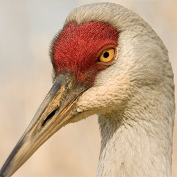 Canada's Birds under Siege by Climate Change