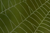 Social Spider Groups Need Bold and Shy Members