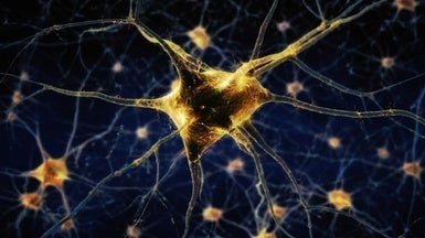Method that Maps DNA Tags Reveals New Types of Neurons