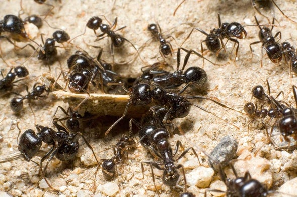 How Ant Colonies Work [Video]