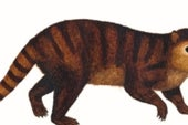 Ancient Toothy Mammal Survived Dino Apocalypse
