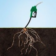 Grassoline: Biofuels beyond Corn
