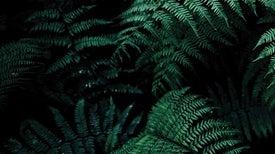 Poem: Bring Back the Leaf