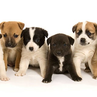 Why are different breeds of dogs all considered the same for Different types of puppies breeds