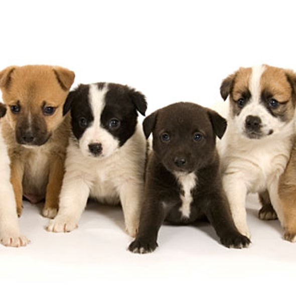 Why are different breeds of dogs all considered the same species?