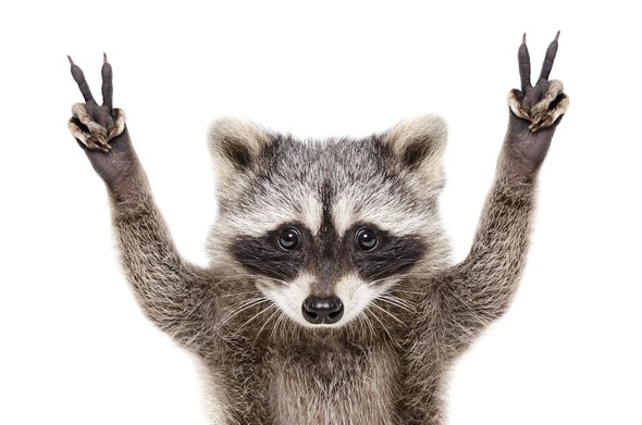 Can a Cartoon Raccoon Keep Schoolkids Safe from COVID-19?