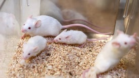 "Controversial CRISPR ""Gene Drives"" Tested in Mammals for the First Time"