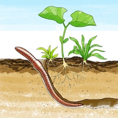 Squirmy science which soil types do earthworms like best for Soil zoology