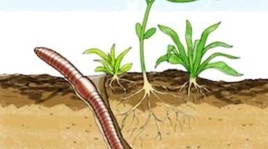 Squirmy science which soil types do earthworms like best for Animals that live in soil for kids