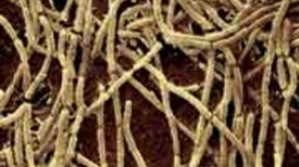 Scientists Succeed in Growing 'Uncultivable' Microorganisms