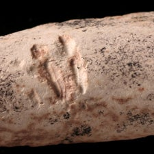 Something to Chew On: Bite Marks Suggest Ancient Mammals Dined On Dinosaur Bones