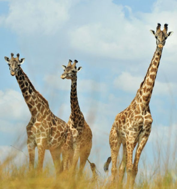 Book Review: <em>Giraffe Reflections</em>