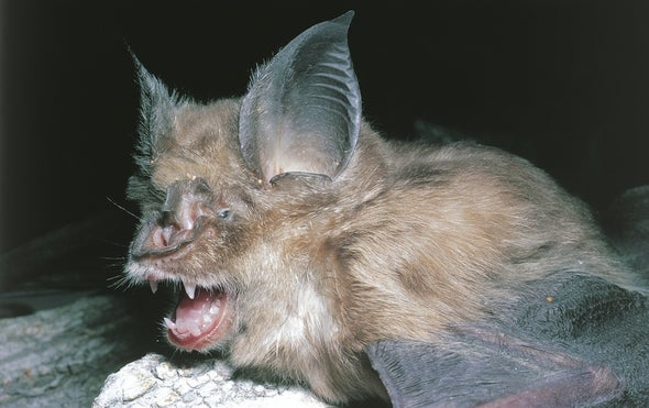 Bat Cave Solves Mystery of Deadly SARS Virus