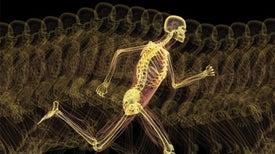 人类进化为运动