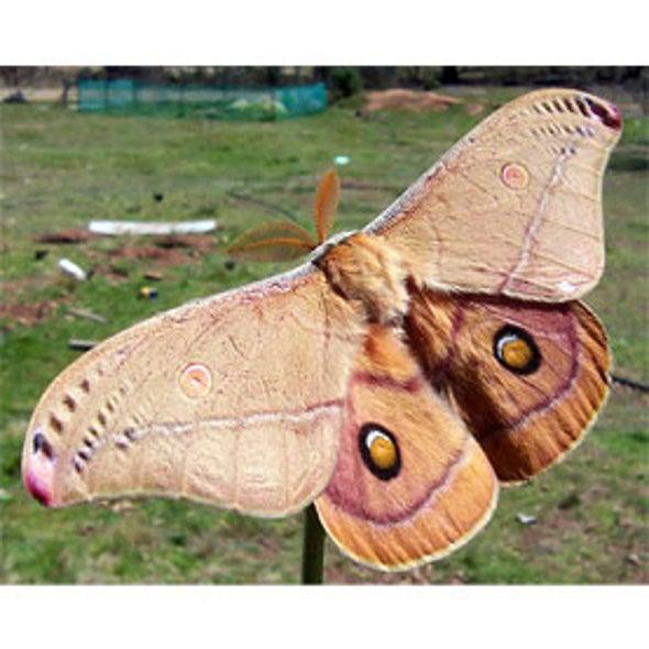 National Moth Week July 2012