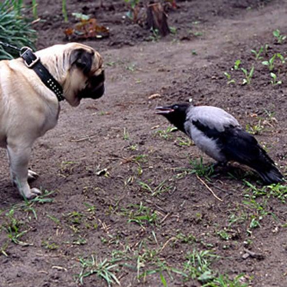 Dog Walking Irks Birds