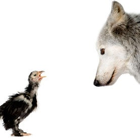 wolf and baby bird