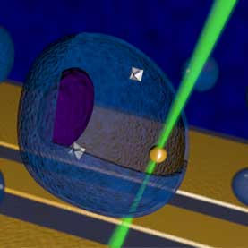 Nanothermometer Takes the Temperature of Living Cells