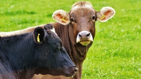 New Test Spots Human Form of Mad Cow Disease with 100 Percent Accuracy