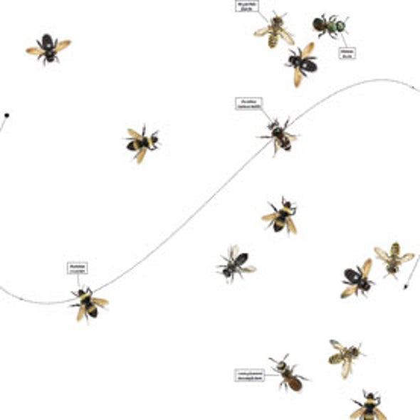 Return of the Natives: How Wild Bees Will Save Our Agricultural System
