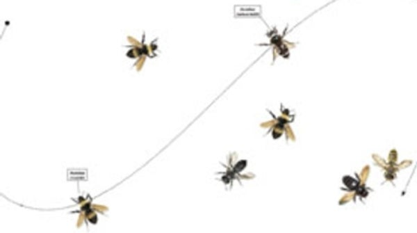 Return of the Natives: How Wild Bees Will Save Our